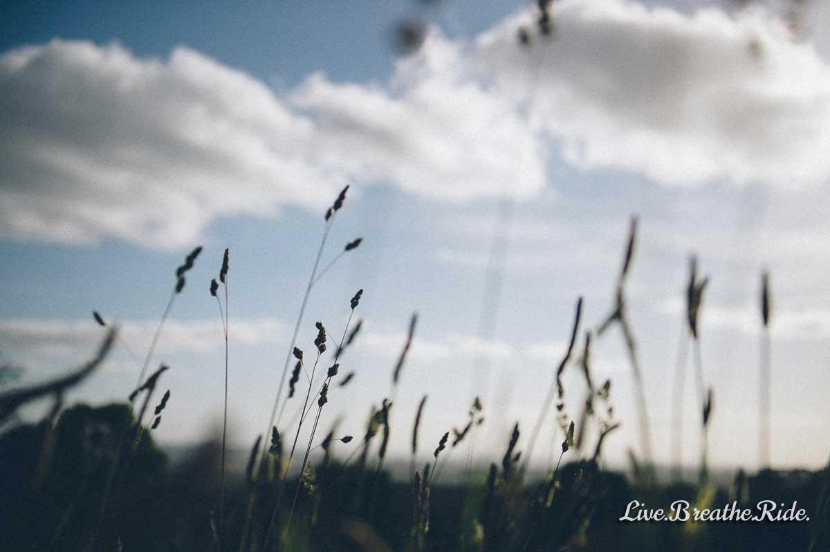 LiveBreatheRide-reeds-in-the-sky