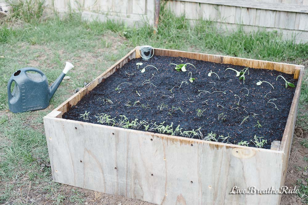 build a raised garden out of scrap timber