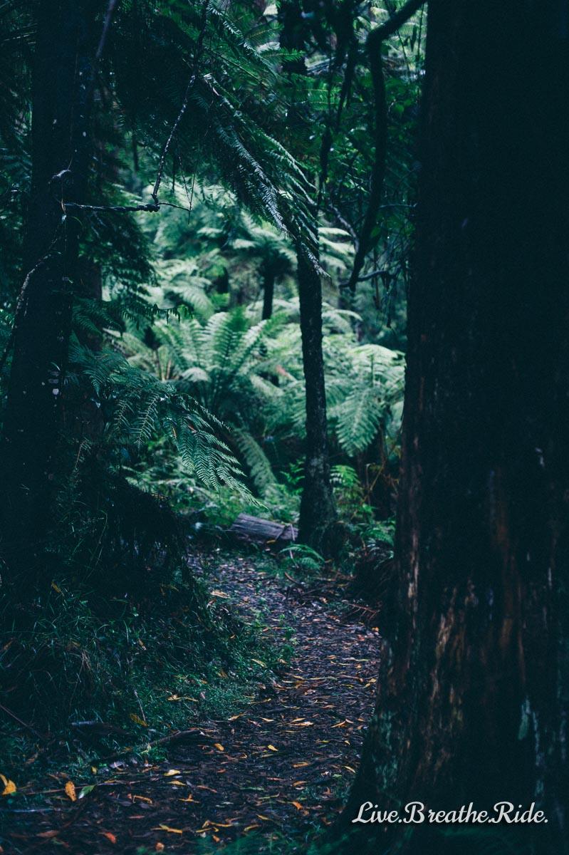 Wilderness-7